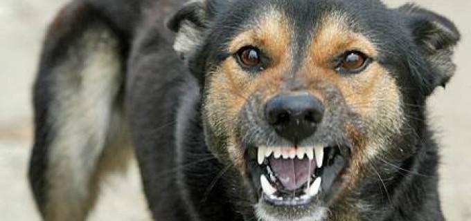 Consiliul Local Turda incearca sa rezolve problema cainilor vagabonzi