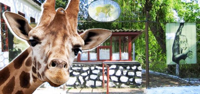 Proiectul de modernizare a Parcului Zoo Turda a intrat pe lista de priorități a primarului Cristian Matei