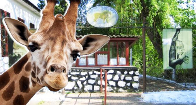 Proiectul de reabilitare și modernizare a Grădinii Zoologice Turda va fi inclus pe lista noilor obiective de investiții ale Guvernului