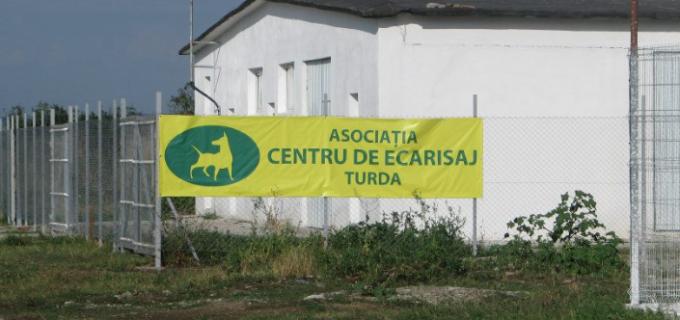 Asociația de Ecarisaj Turda pune la dispoziția cetățenilor Formulare pentru identificarea câinilor agresivi