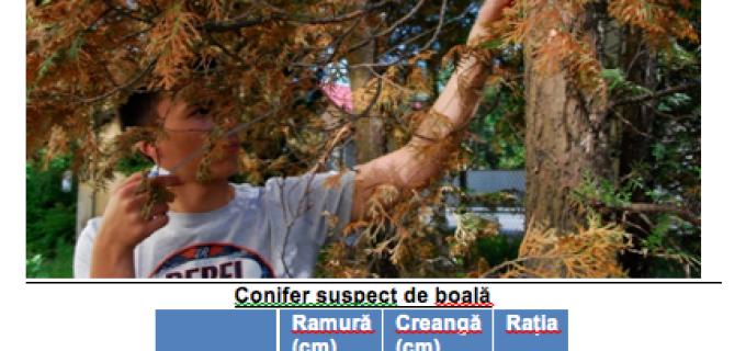 La Colegiul Național Mihai Viteazul din Turda s-a finalizat o cercetare despre conifere care a debutat în urma cu 2 ani