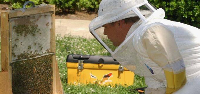 Sprijin financiar prin PNDR 2020 pentru investiții în apicultură