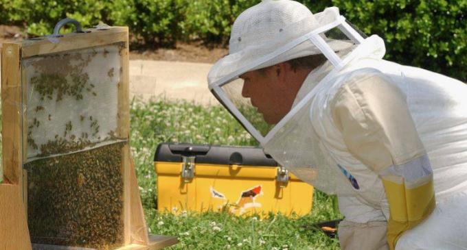 În atenţia apicultorilor de pe raza UAT a municipiului Turda