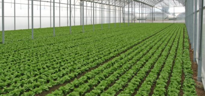 Buletin de avertizare din partea Autorităţii Naţionale Fitosanitare cu privire la culturile de legume