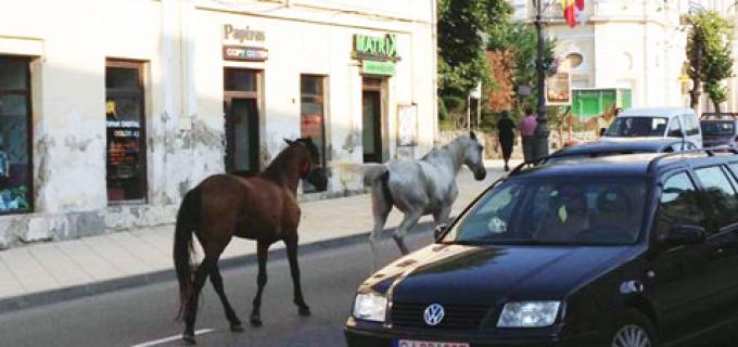 Comunicat Poliția Locală Turda