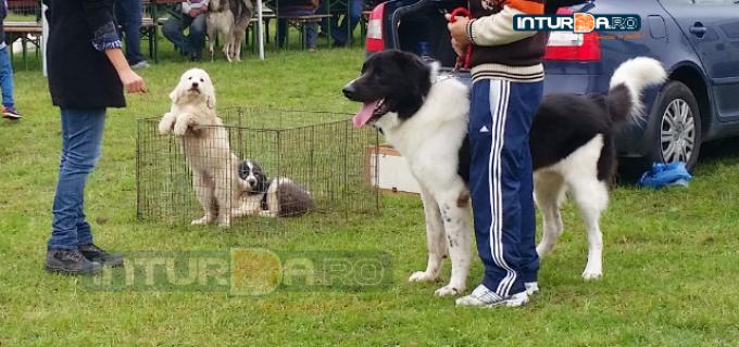 "VIDEO: S-a dat startul expozitiei ""Turda DOG SHOW 2015"""