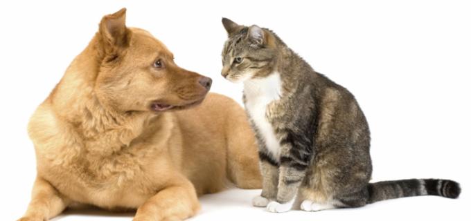 Campanie de sterilizare a câinilor şi a pisicilor la Turda.