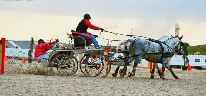 VIDEO: Spectacol cu ponei la proba de atelaje din cadrul Salina Equines Horse Trophy