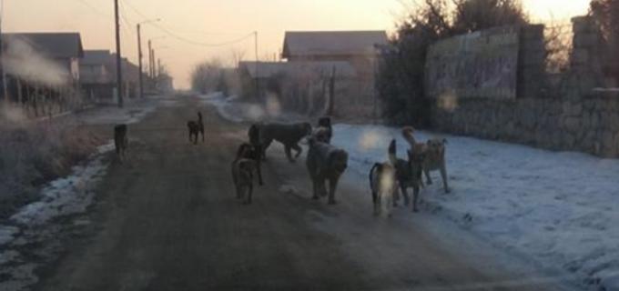 Peste 280 de câini fără stăpân au fost ridicați din Turda în ultimele două săptămâni