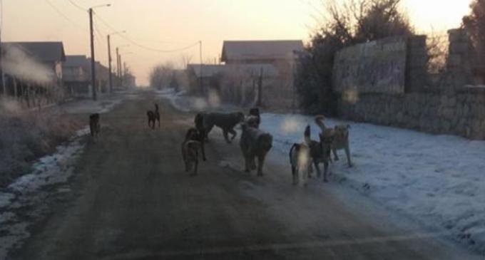 """Cetățenii din cartierul primăverii așteaptă o rezolvare a situației câinilor maidanezi: """"Mi-e și frică să umblu fără mașină!"""""""