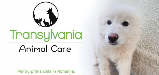 APEL la acțiune înaintea înființării centrului pentru câini comunitari la Câmpia Turzii