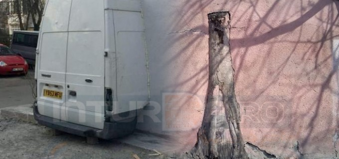 Români inventivi în construcții: la Turda se zidesc copaci, la Bacău autoturisme!