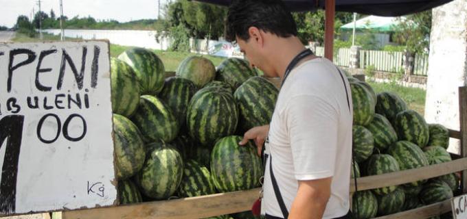 Comercializarea pepenilor verzi se realizează cu respectarea condițiilor tehnico – sanitare în cele două piețe amenajate de pe raza unității adminitrativ teritoriale a municipiului Turda