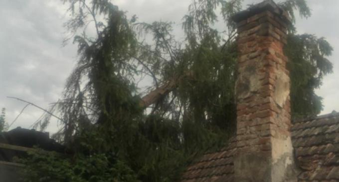 Foto/VIDEO: Vântul puternic a făcut ravagii la Turda