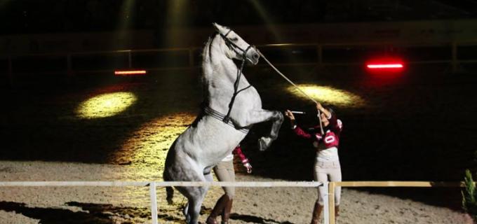 S-au pus în vânzare biletele pentru spectacolele Salina Equines Horse Trophy