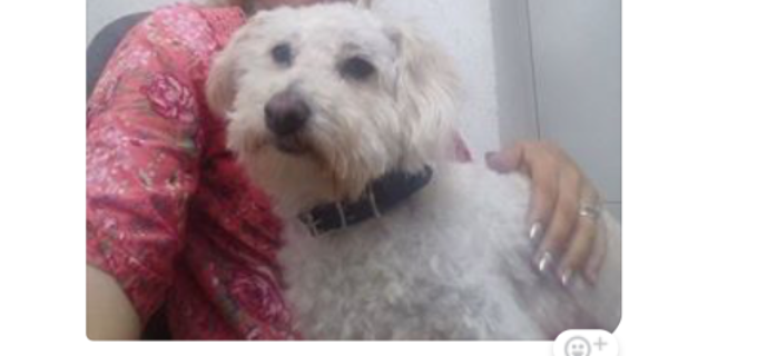 Proprietarii unui cătelus din Turda cer ajutorul pentru a-și găsi câinele dispărut