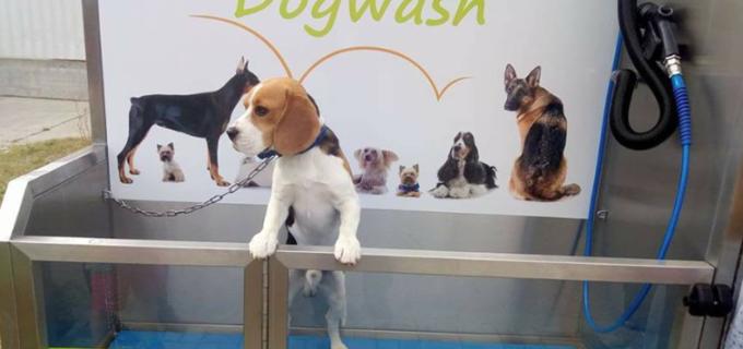 Unic în România! La Cluj s-a deschis prima spălătorie pentru… câini – Dogwash