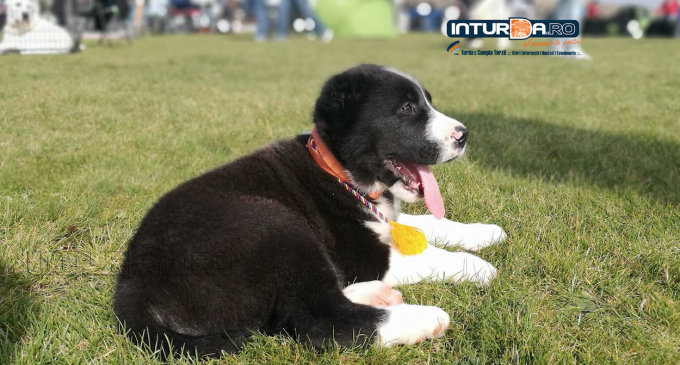Asociatia Chinologica Turda organizează cel mai mare eveniment chinologic din zona : Turda Dog Show