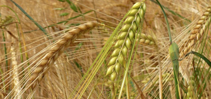 Stabilirea prețurilor la principalele produsele agricole pentru anul 2018