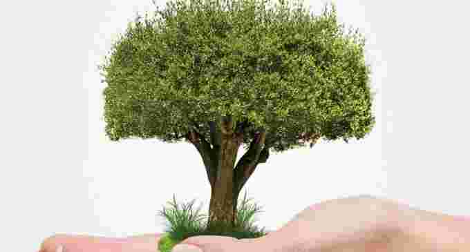 Actiune de plantare de puieți forestieriîn zona Băilor Sărate Turda