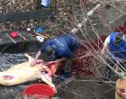 VIDEO: Știrea ta – Imagini incredibile! Turdenii taie porcul în curtea blocului
