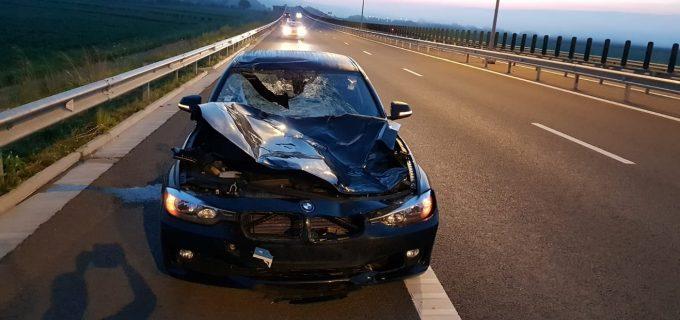 Foto: Accident pe Autostrada Turda-Aiud. Un BMW facut praf de un… cerb!