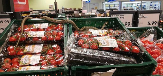 VIDEO: Surpriză la un hipermarket! Un șarpe de peste un metru se plimbă peste lăzile de roșii