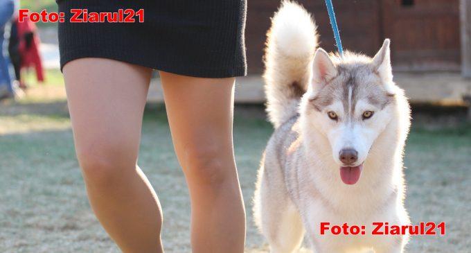VIDEO: Turda Dog Show 2019. Peste 1200 de câini au participat la cea mai mare expoziție chinologică din zonă