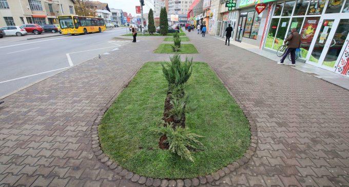 Spațiul verde din zona Materna a fost modernizat!