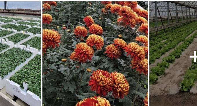 Una dintre activitățile Domeniului Public Turda o reprezintă cultivarea de legume și flori. Produsele se pot achiziționa direct de la sediul firmei