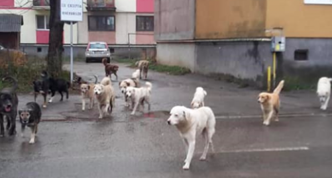 PMP Turda – Despre problema câinilor maidanezi