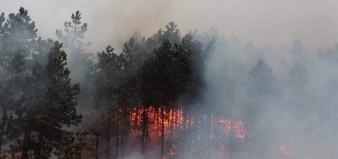Incendiu în pădurea Făget. Pompierii au intervenit cu două autospeciale