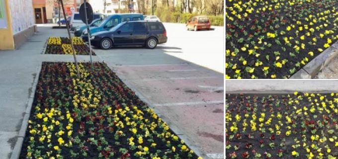 Primăria Turda a început amenajarea spațiilor verzi din oraș. Vine primăvara!