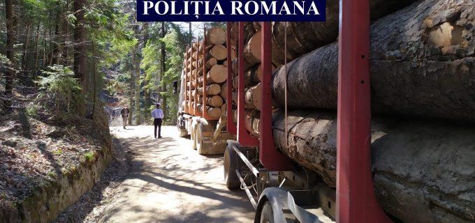 Politia Română, 6 zile de acțiuni pentru apărarea pădurilor: 207 amenzi, peste 100 dosare penale!