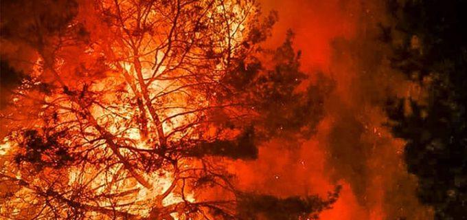 Respectă Natura! Dacă oamenii ar înțelege să nu dea foc vegetației, nu s-ar ajunge să se distrugă bunuri sau vieți!