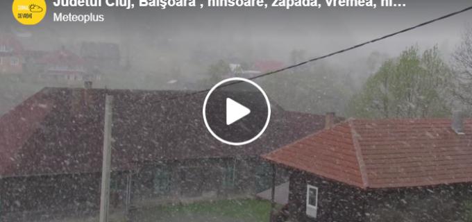 VIDEO: 6 mai 2020. Ninge la Băișoara și Mărișel.