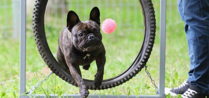 FOTO: Parc de joacă pentru câini! Proiectul Turda Decide #5 a fost finalizat