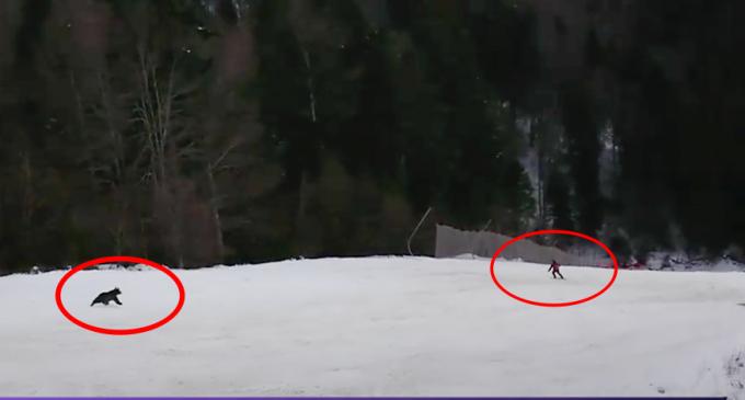 VIDEO. Schior fugărit de urs pe o pârtie din România