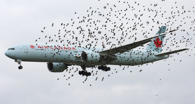 FOTO Aterizare cu emoții pe Aeroportul din Cluj! Avionul a lovit un stol de păsări chiar deasupra oraşului