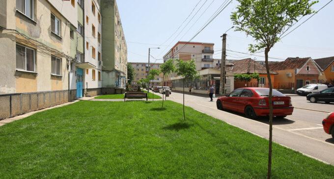VIDEO 🌳 Au fost plantați 150 de arbori pe spațiile verzi de pe străzile Amurgului și Toamnei
