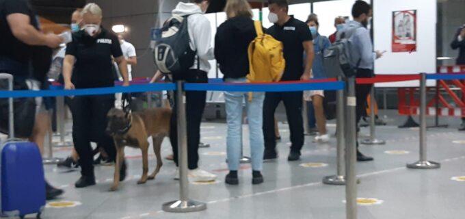 Câini antrenați în depistarea persoanelor infectate cu virusul SARS-Cov-2 la Aeroportul Avram Iancu din Cluj