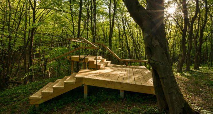 Pădurea-parc Făget: O nouă zonă de agrement și recreere în natură pentru clujeni
